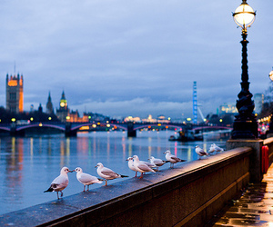london, city, and bird image
