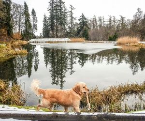 Herbst, see, and hund image