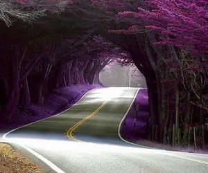 road, tree, and purple image