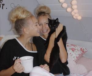 beauty, room, and cat image