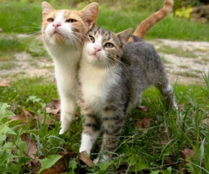 cats, lovely, and two image