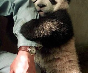 panda and hug image