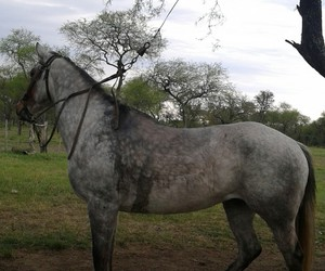 guadalupe, horse, and cute image