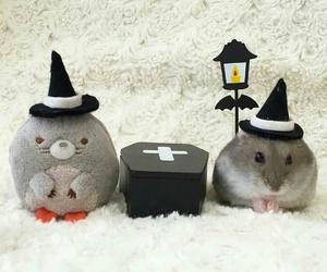 costume, Halloween, and hamster image