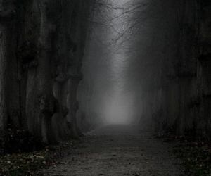 dark, forest, and Halloween image