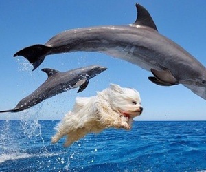 dog, dolphin, and funny image