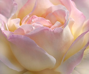 dreamy, flowers, and pastel image