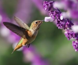 fauna, flora, and hummingbird image