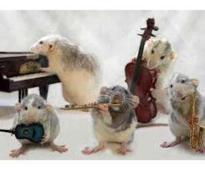 animal, hamster, and instrument image