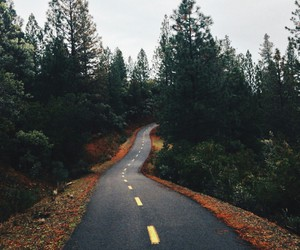 fall, road, and trees image