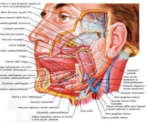 aggiungi più tag and anatomia bocca image