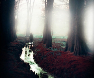 blur, fog, and woods image