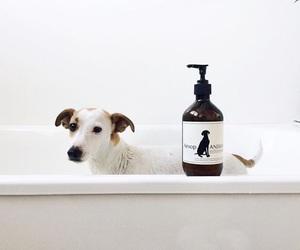 animal, bath, and bathroom image
