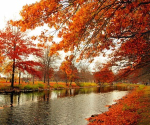 autumn, beautiful, and chic image