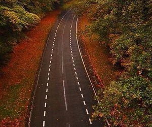 road, autumn, and fall image