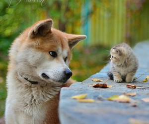 dogs, animals, and cats image