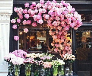 flowers, pink, and place image