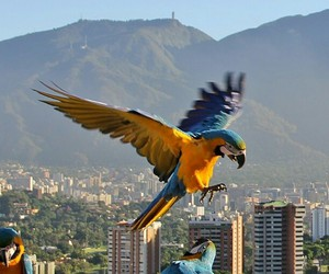 aves, sky, and south america image