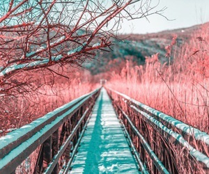 beautiful, photography, and pink image