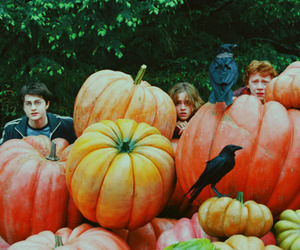 boy, rupert grint, and harry potter 3 image
