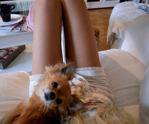 dog, legs, and cute image