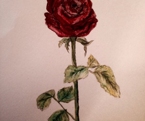 art, paint, and rose image