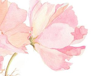 wallpaper, flowers, and pink image