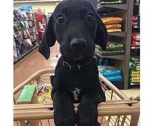 animals, puppy, and black image