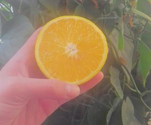 eat, fruit, and orange image