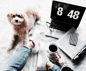 coffee, dog, and computer image