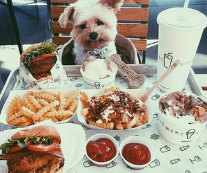 burger, lovely, and puppy image