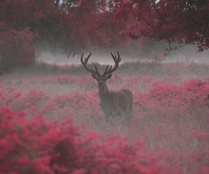deer and animals+ image