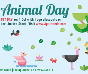online dog food, dog food in india, and dog food products image