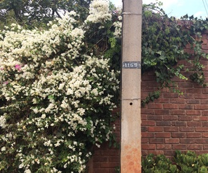 africa, brick wall, and flowers image