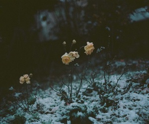 flowers, snow, and rose image