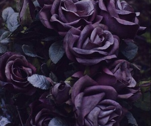 flowers, purple, and roses image