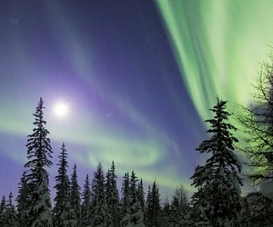 aurora borealis, forest, and nature image
