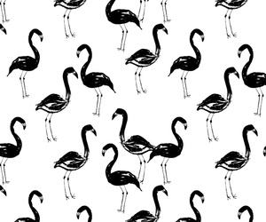 background, black and white, and flamingo image