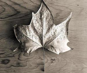 leaves and black and white image