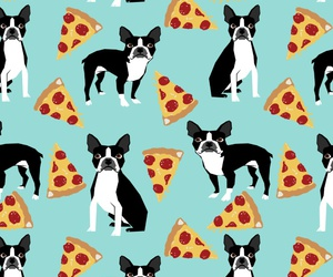 background, boston terrier, and dog image
