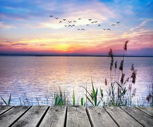 nature, landscape, and birds image