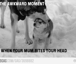 awkward, baby, and dogs image