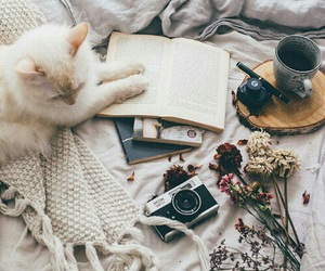 cat, book, and camera image