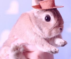 rabbit, wallpaper, and pets image