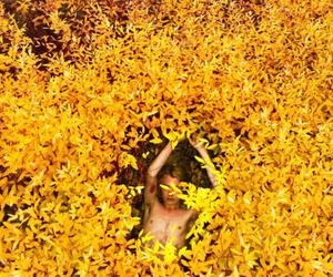 leaves, photography, and ryan mcginley image