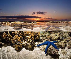 ocean, starfish, and underwater image