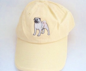 hat, yellow, and dog image