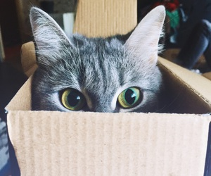 box, cat, and cat in box image