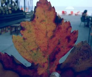 autumn, Greece, and leaf image