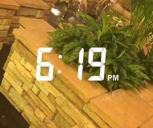 plants, time, and tumblr image